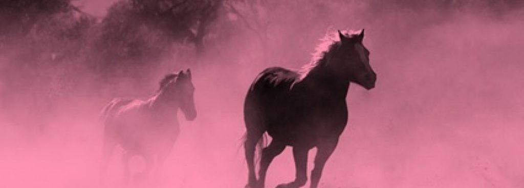 IT-Sektor:Pferde rennen schnell durch Prärie